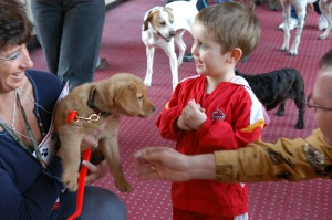 "Pheasant Fest is ""ruff"" work for dogs and kids ... but fun, too"