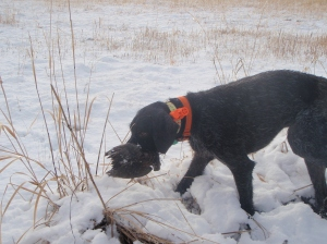 Not ready for retrieves yet - this is from last season. But soon, soon enough.