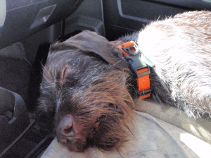 Sometimes, it's just the companionship of a tired hunting partner that makes your trip.