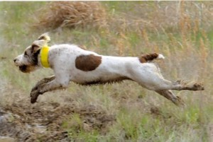 He runs like an all-age dog!